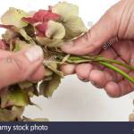 Material Hydrangea Flowers Wisteria Branches Wire Scissors Ribbon Gold Spray Paint Procedure Make A Circle Of Wisteria Branches Tie Hydrangea Blossoms On The Ring By A Wire Spray Gold Paint On The