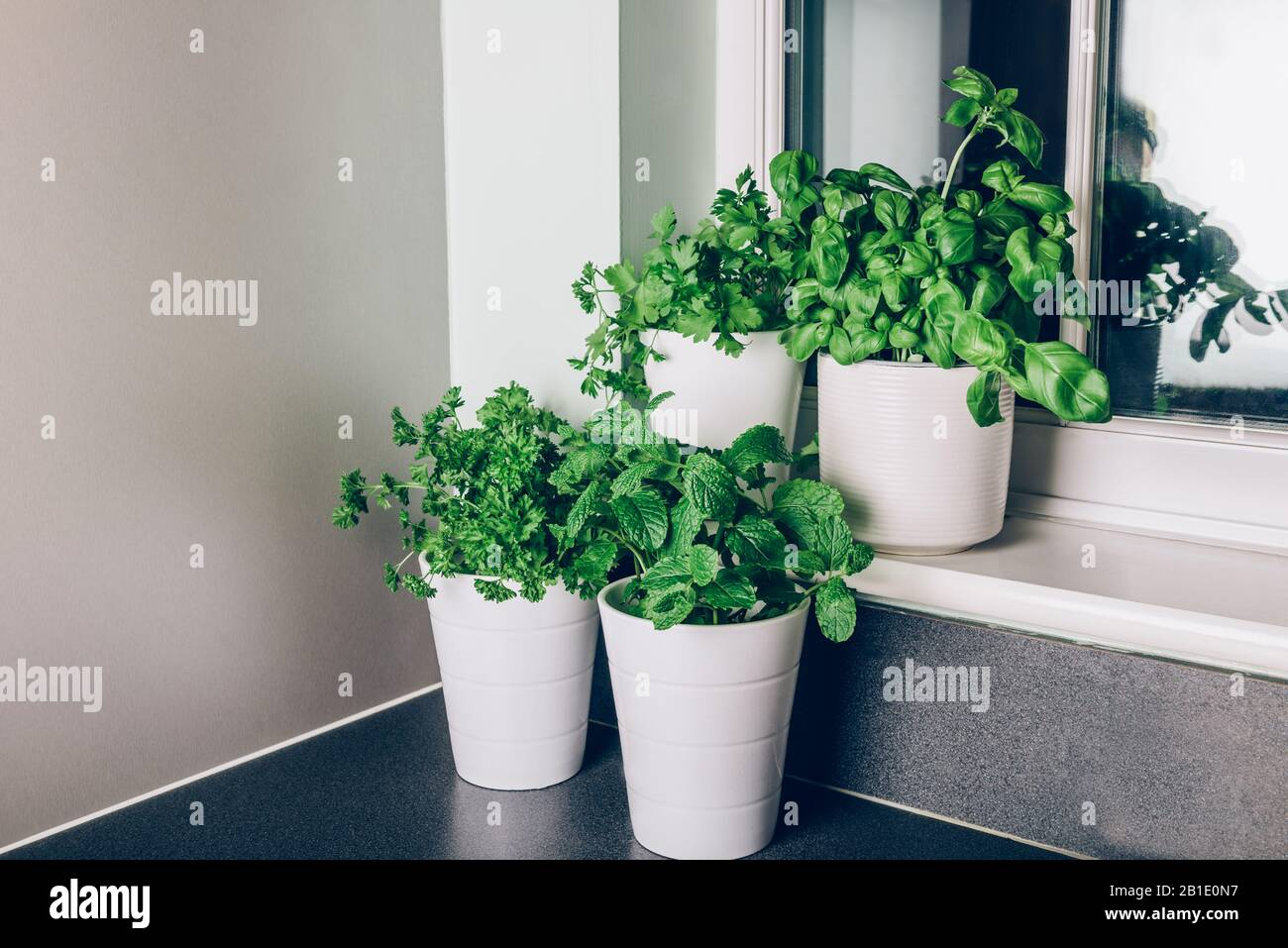 Assorted Herbs Thyme Oregano Basil Stockfotos Und Bilder Kaufen Alamy