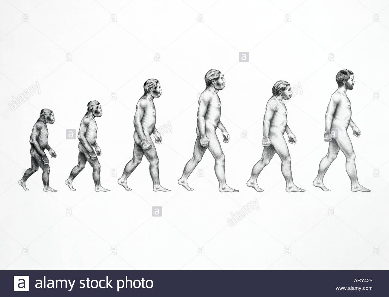 Homo Sapiens Evolution Stockfotos Amp Homo Sapiens Evolution Bilder