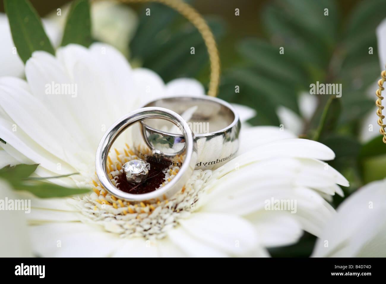 Silberne Hochzeit Ringe Bands Closeup auf Brute Bouquet ruht auf einer weien Gerbera Blume