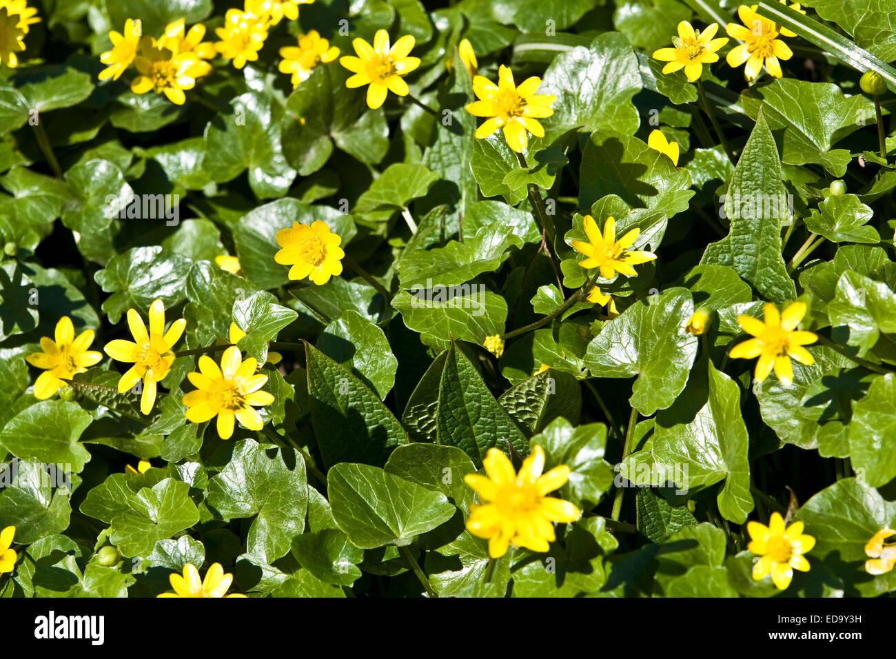Fruhlingsblumen Namen Lifestyle Ein Wunderschoner Winterstrauss