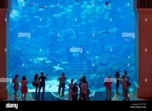 Atlantis Dubai Aquarium Stockfotos &