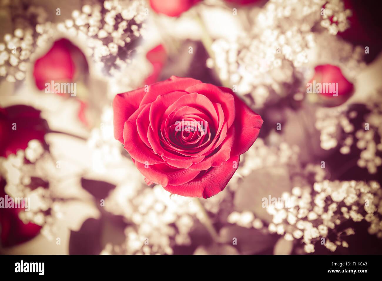 Roter Hochzeitsstrau Stockfotos  Roter Hochzeitsstrau