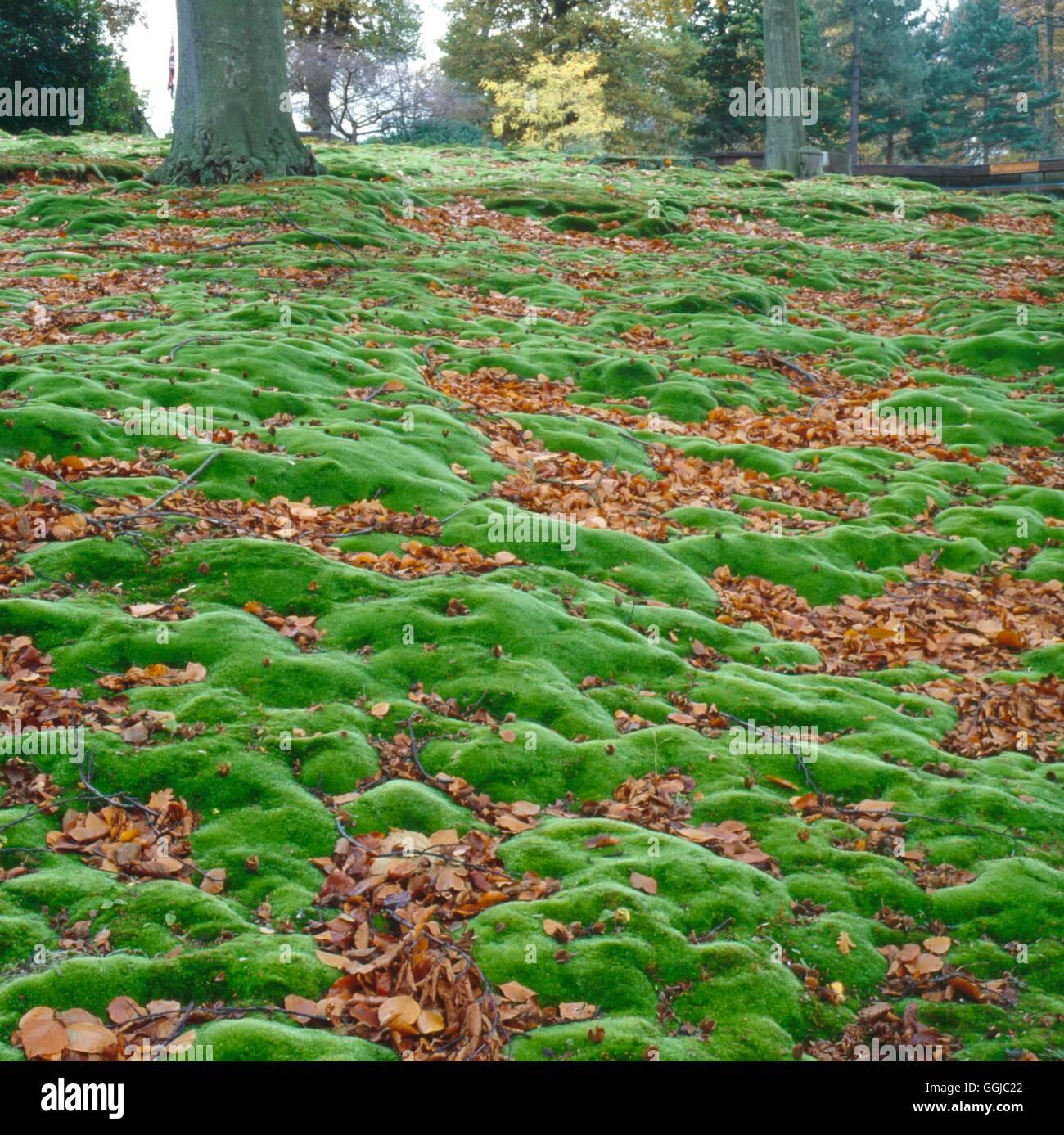 Alternative Zu Rasen Kunstrasen Im Garten Fotogalerien Von Unseren