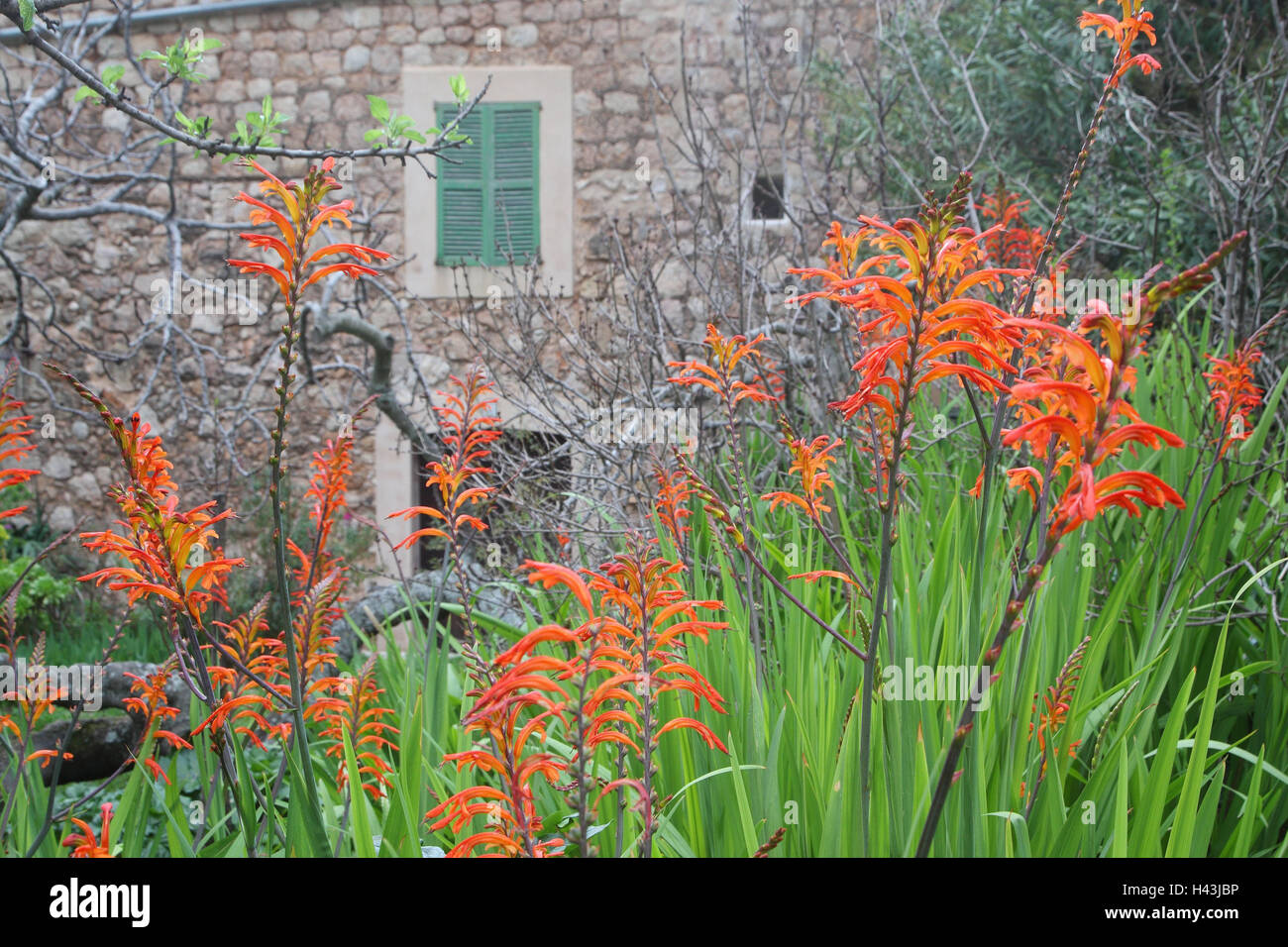 Mallorca Cala de Deia Hausfassade Garten Blumen