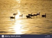 Tegel Lake Stockfotos & Tegel Lake Bilder - Alamy