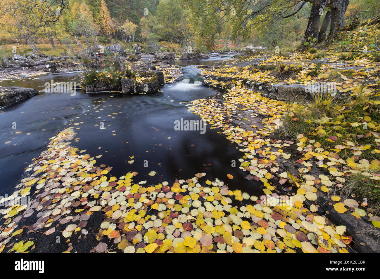 Der Magische Findhorn Garten Foliage Autumn Scotland Stockfotos And Foliage Autumn