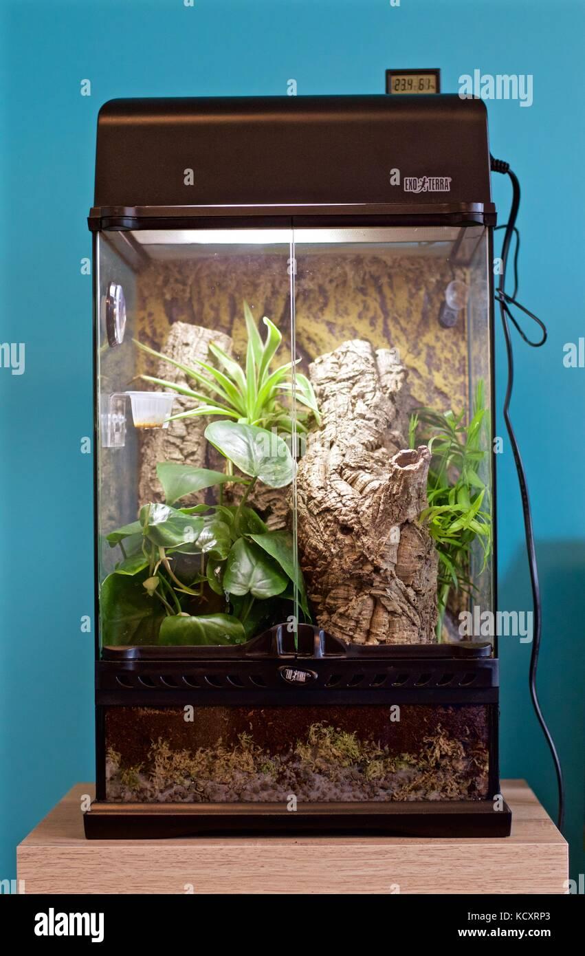 exo terra terrarium fur crested gecko