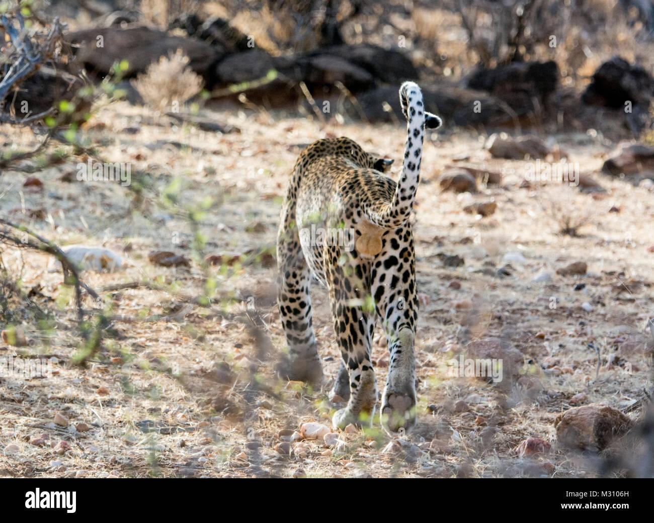 Pferde Hoden Stockfotos  Pferde Hoden Bilder  Alamy