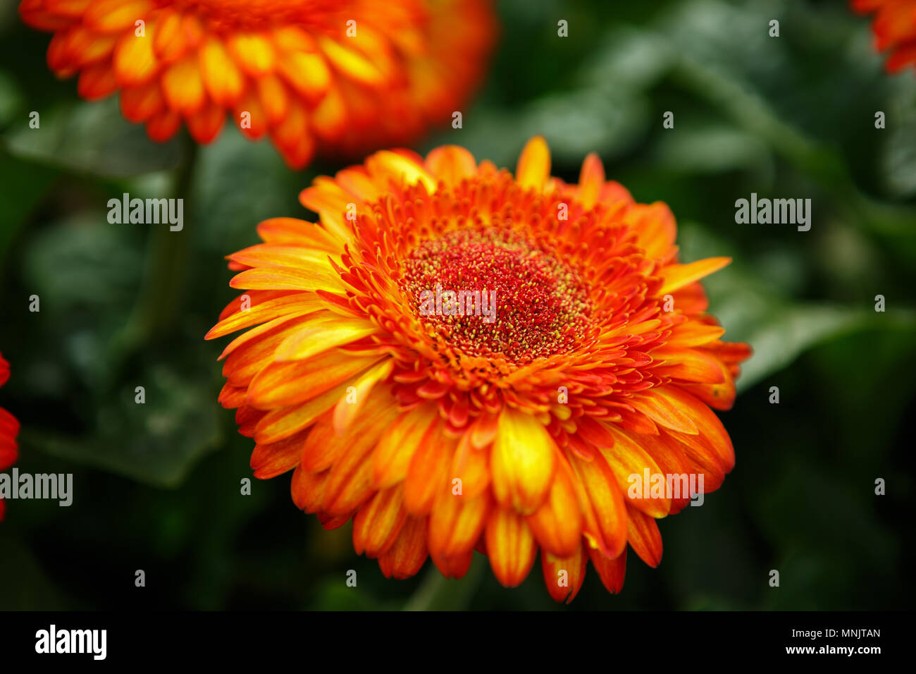 Welche Blumen Blhen Im Frhling Best Im Frhjahr With