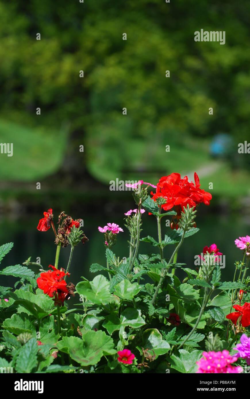 Schöne Blumen Im Garten Garten Pflanzen Winterhart Reizend 35