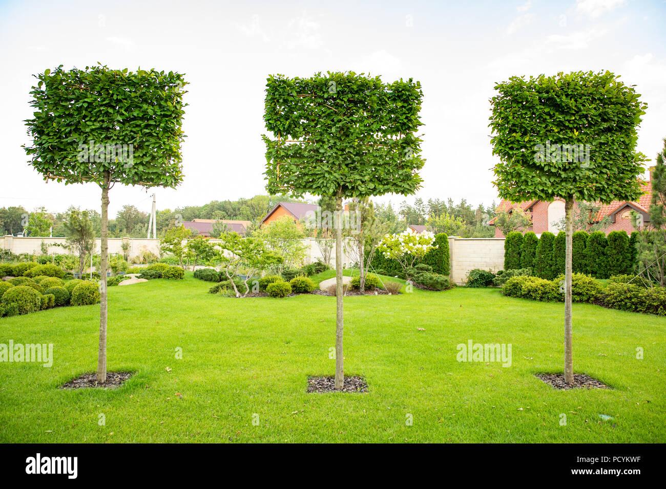 Garten Gestalten Bäume Design 42 Für Schöne Bäume Für Den Garten