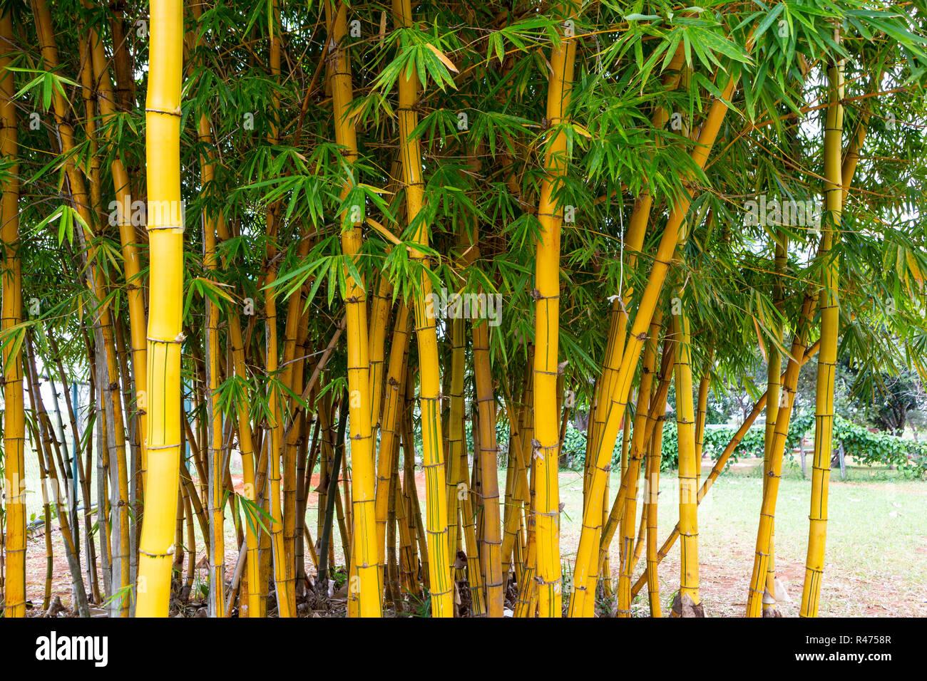 Bambus Garden Halle