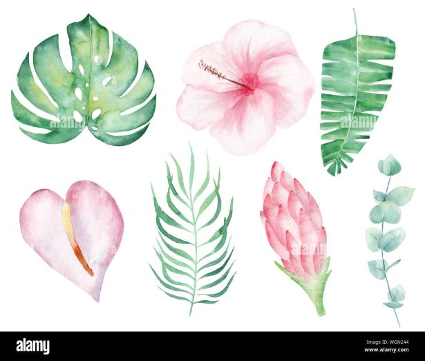 urwald pflanzen zeichnen bilder  dave derrick dekor