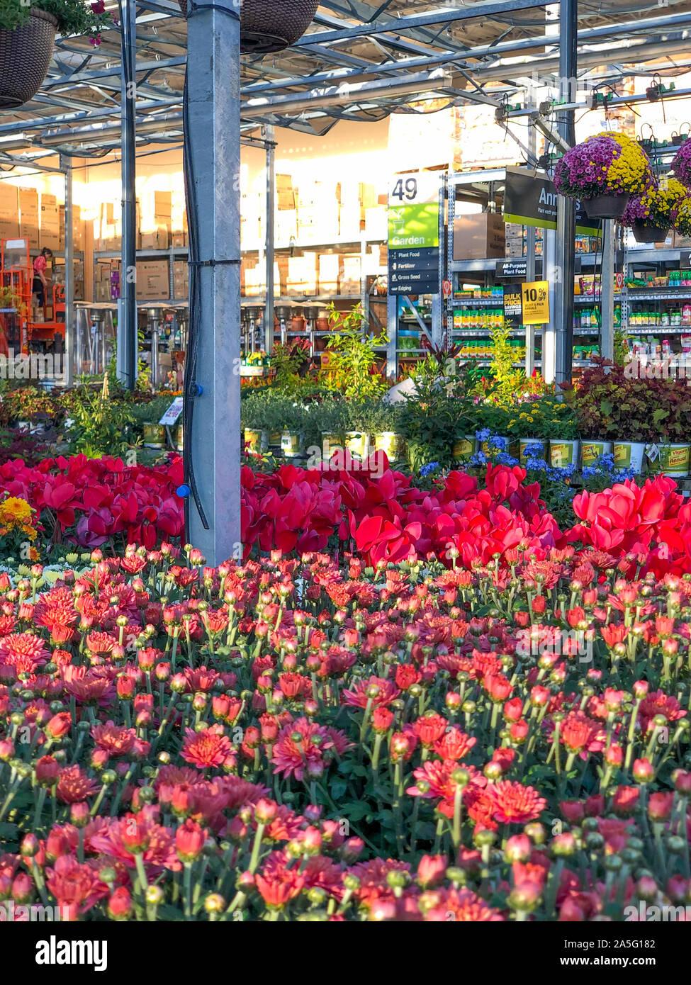 Planta De Luz Home Depot : planta, depot, Filas, Coloridas, Flores, Plantas, Venta, Jardín, Vivero, Depot,, Diego,, EE.UU.., Octubre, 15th,, Fotografía, Stock, Alamy