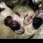 Newborn Jack Russell Fotos E Imagenes De Stock Alamy