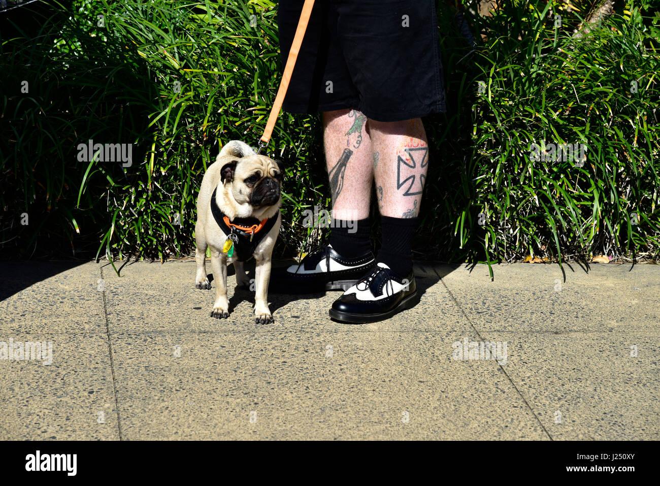 Hombre Con Pet Pug Y Tatuaje De Cruz De Malta En La Pierna A