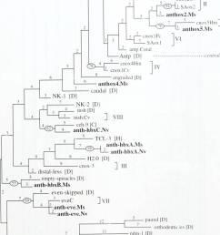 la biolog a zoolog a biolog a biolog a marina pdm 1 d cut d d orthodenticles  [ 957 x 1390 Pixel ]