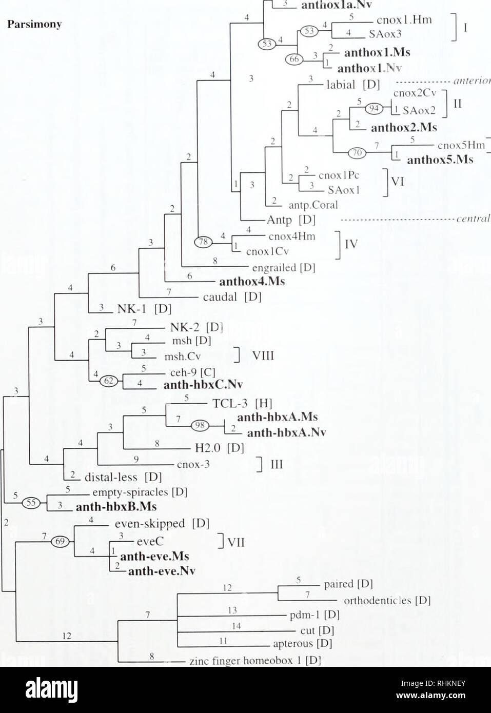 medium resolution of la biolog a zoolog a biolog a biolog a marina pdm 1 d cut d d orthodenticles