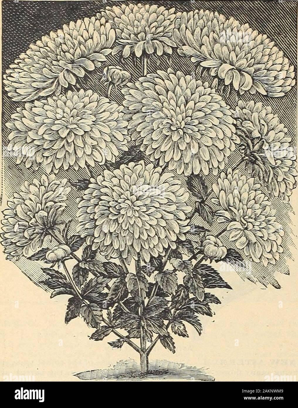 Pousse De Pétale De Sang : pousse, pétale, Making, Cactus, Flower, Banque, D'image, Photos, Alamy