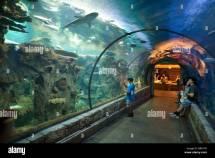 Les Gens Dans Le Tunnel Des Requins Regardant Shark