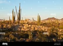 Baja California Scenery