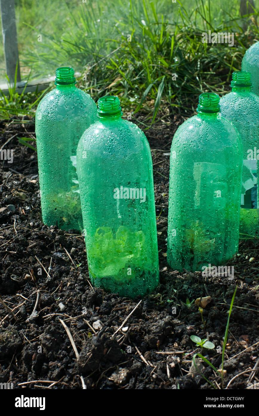 https www alamyimages fr photo image boissons en bouteilles de plastique recycle utilise comme mini serre sur un allotissement londres 59547095 html
