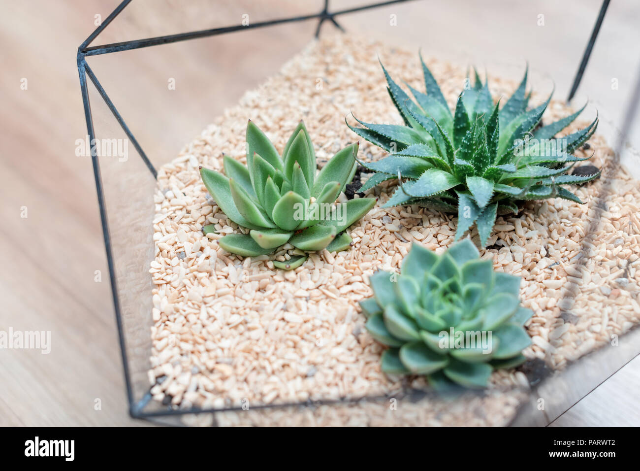 Mini Jardin D Interieur Cactus Succulentes Mini Maison Jardin