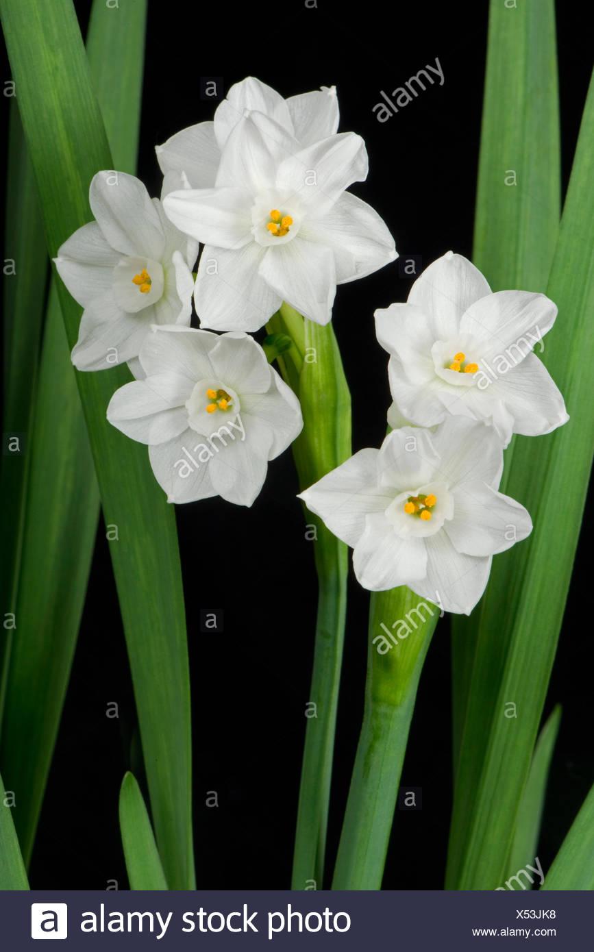 Plante D Interieur Fleur Blanche Les Fleurs Aquatiques Ooreka