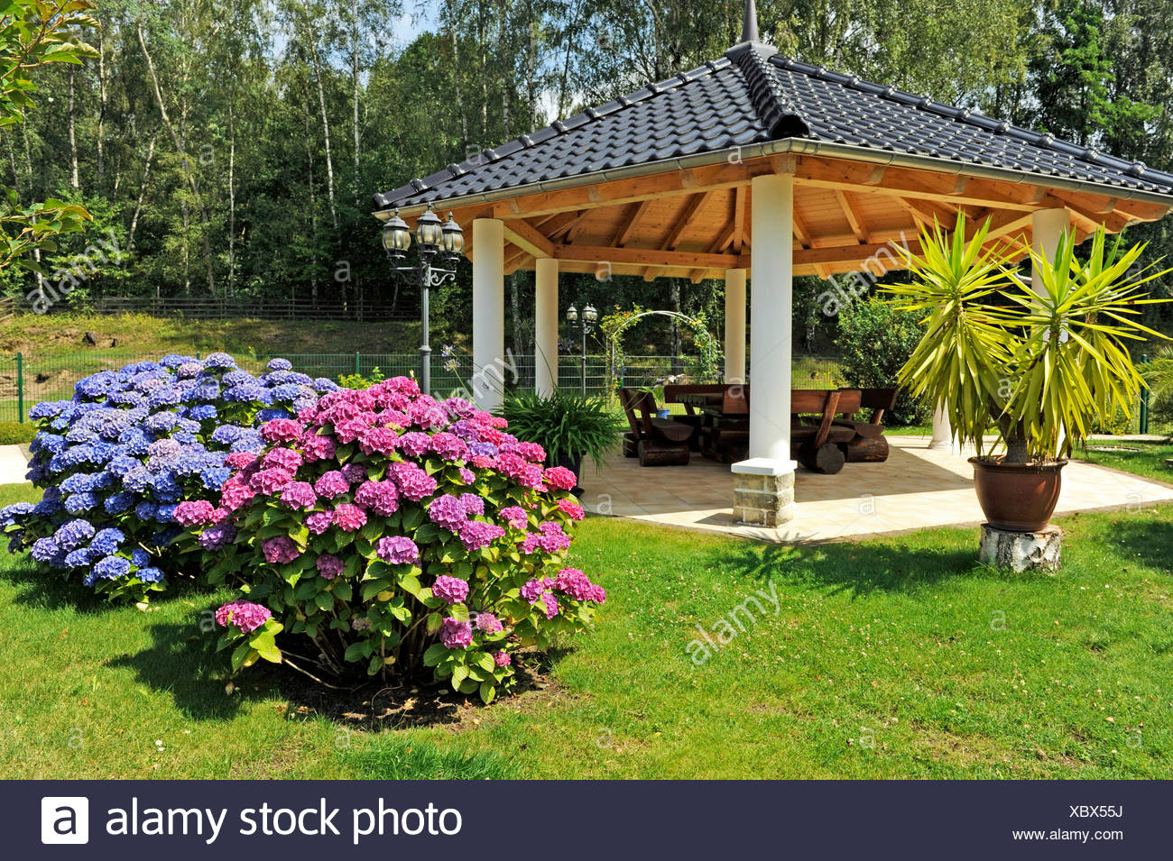 https www alamyimages fr floraison rouge et bleu hortensia arbustes en face de jardin romantique pavillon avec coin salon rustique et plantes a remous image282701934 html