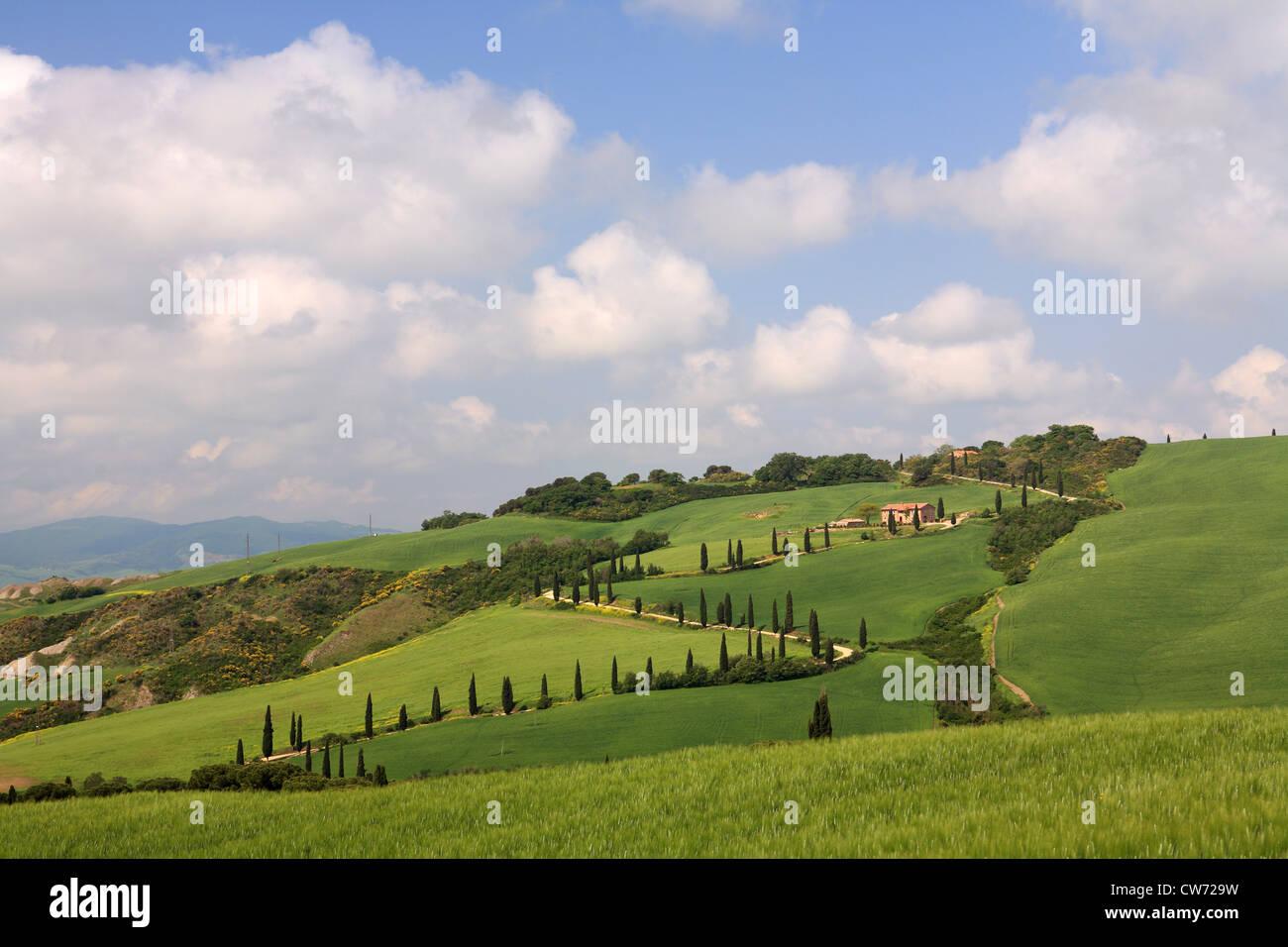 Un paesaggio collinare con strada di campagna e cipressi