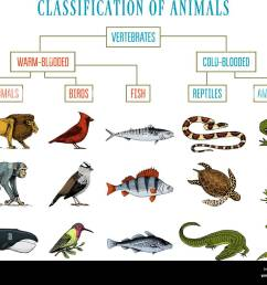 Fish Amphibian Worksheet   Printable Worksheets and Activities for  Teachers [ 1039 x 1300 Pixel ]
