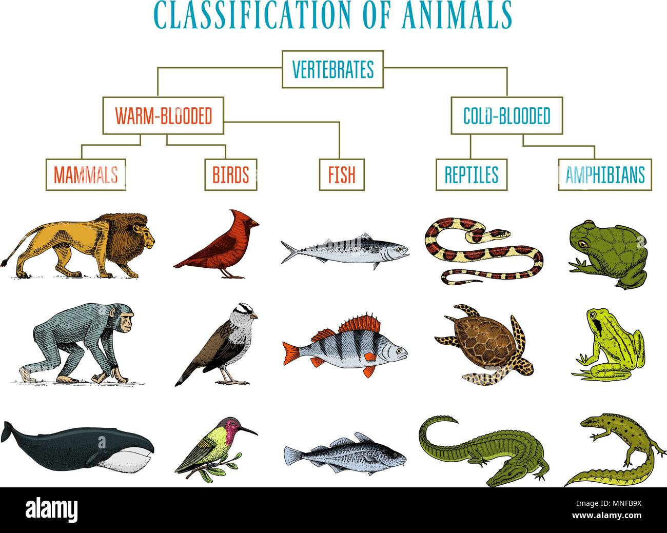 hight resolution of Fish Amphibian Worksheet   Printable Worksheets and Activities for  Teachers