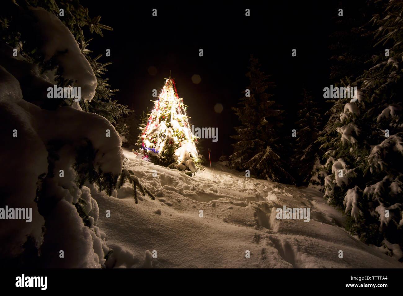 Visualizza altre idee su paesaggi, dipingere immagini, disegni di paesaggi. Illuminato Albero Di Natale Sul Paesaggio Innevato Di Notte Foto Stock Alamy
