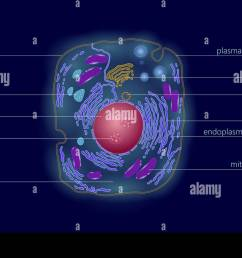 animal human cell structure educational science microscope 3d eukaryotic nucleus organelle medicine technology analysis glowing colored biology poster  [ 1300 x 902 Pixel ]
