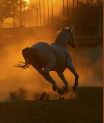 Running Horses Sunset