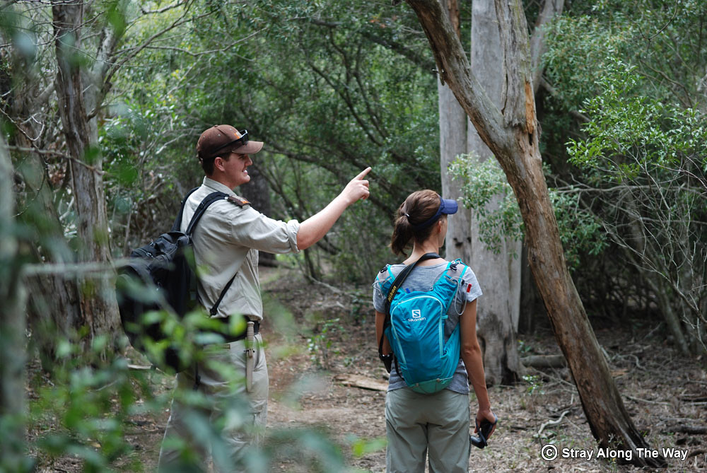 Nathan-explaining-the-bush-on-the-Ingwe-Trail