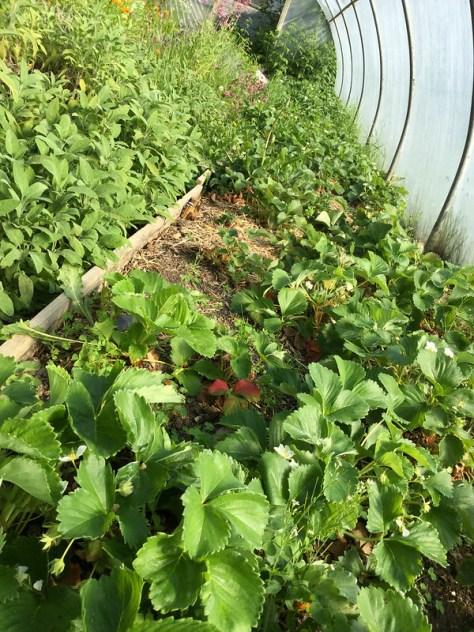 Farm2