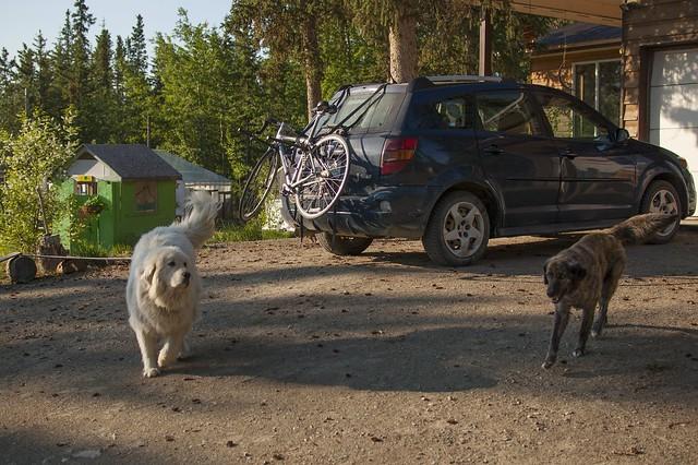Yukon Dogs