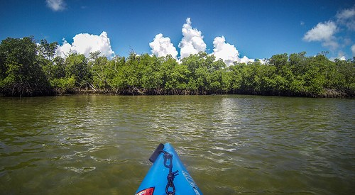 Indian River Paddling-52
