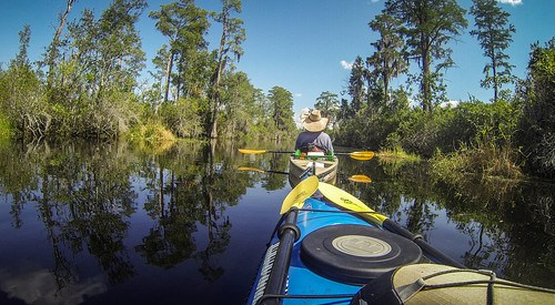 Lowcountry Unfiltered at Okefenokee-116