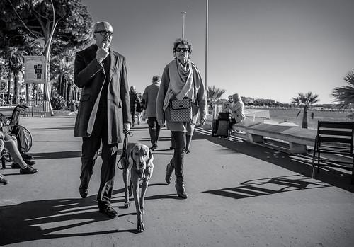 So Cannes #9 - Like master, like dog...