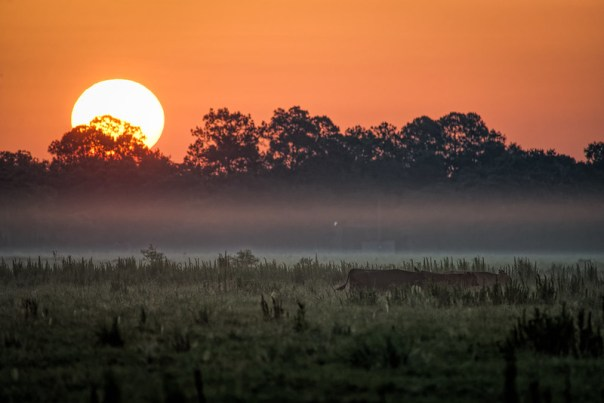 Sunrise over the pasture