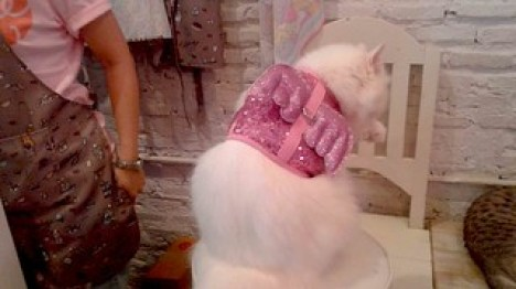 Cute Cat outfit