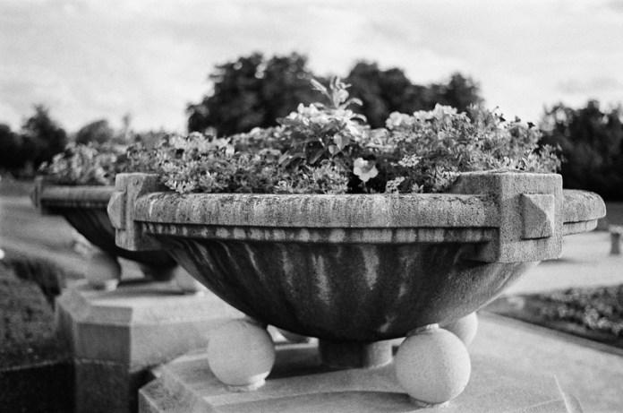 Bucket o' flowers