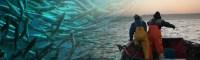 ¿Anular, reformar o derogar la Ley de Pesca?, la discusión que se viene