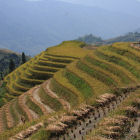 Rice terraces, China