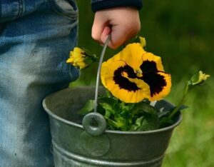 Child holding a bucket with a pansy