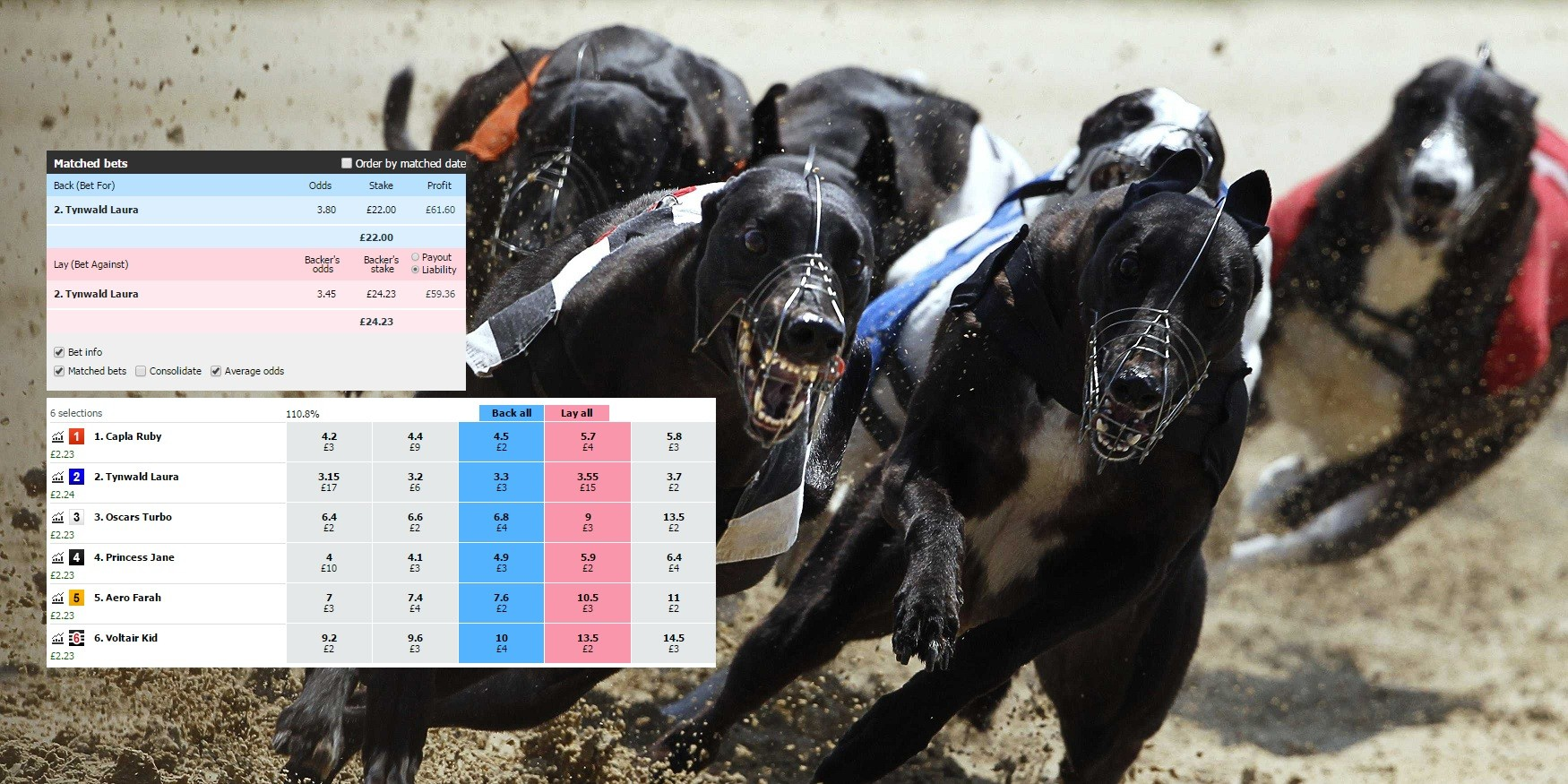 How To Trade Greyhounds On Betfair