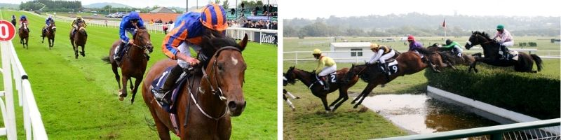 2 UK Racing Types for Horses
